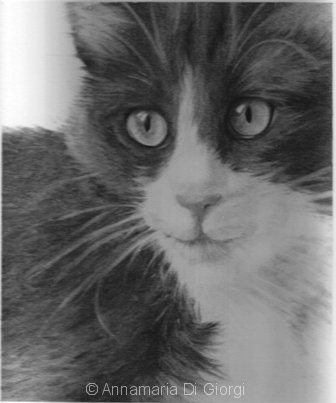 Gatto - Carboncino
