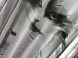 Esposizione Felina Internazionale - Sesto San Giovanni, 13-14 ottobre 2012