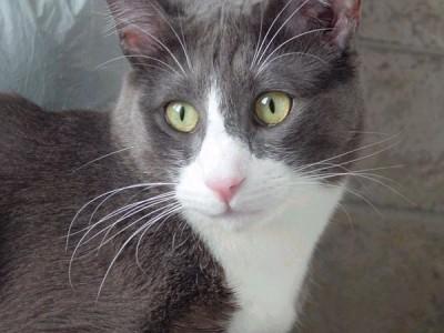 Ecco la foto originale di Gatto