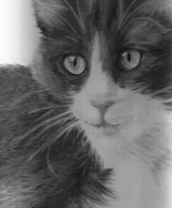 Anna Maria Di Giorgi: ritratto a carboncino di Gatto