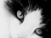 ...il gatto - carboncino